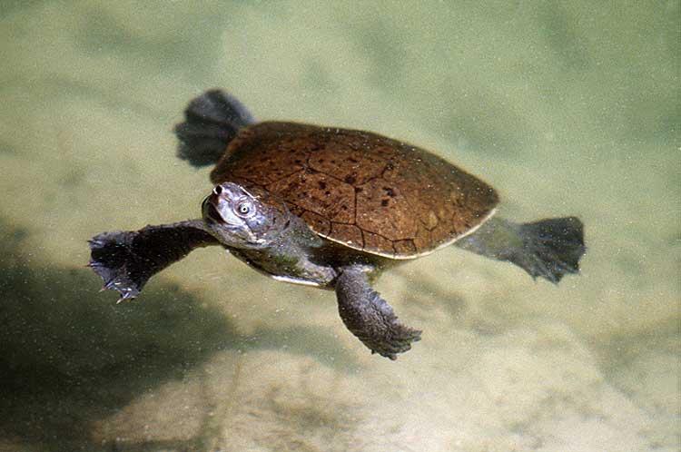 Fraser Island Wildlife Sunrover Com Au
